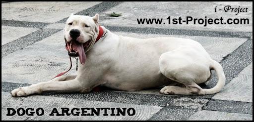 argentino brazil